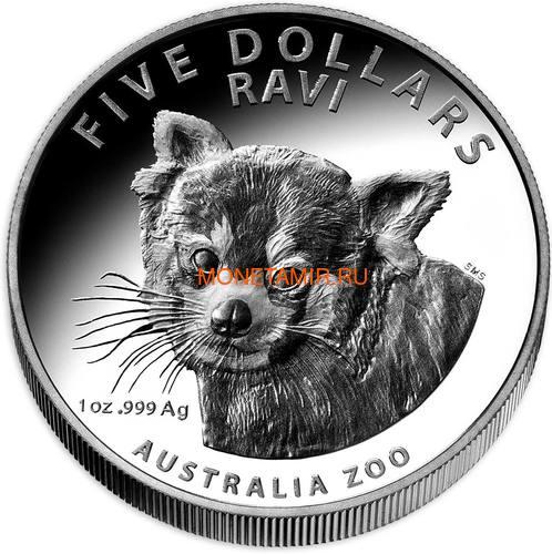 Австралия 5 долларов 2018 Красная Панда - Зоопарк (Australia 5$ 2018 Zoo Series Ravi Red Panda).Арт.60 (фото)