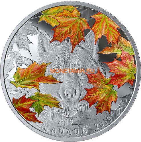 Канада 30 долларов 2019 Хитрый Волк (Canada 30$ 2019 Wily Wolf 2 Oz Silver Coin).Арт.67 (фото)