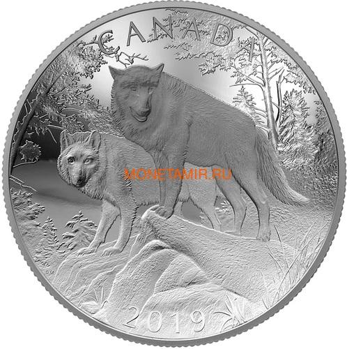 Канада 100 долларов 2019 Волки Величие Природы Выпуклая Двойная Толщина (Canada 100$ 2019 Wolves Nature's Grandeur Series Piedfort Concave 10 oz Silver Coin).Арт.67 (фото)
