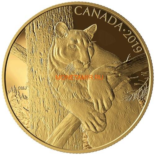 Канада 350 долларов 2019 Пума Портреты Дикой Природы (Canada 350$ 2019 Cougar Wildlife Portraits 35 gr Gold Proof Coin).Арт.1295EK1.432600E/75 (фото)