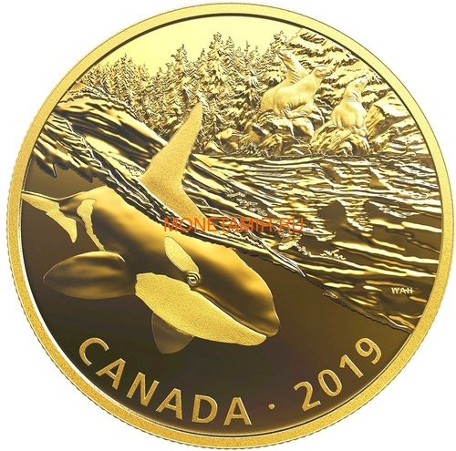 Канада 30 долларов 2019 Касатка и Морские Львы Хищник и Добыча (Canada 30$ 2019 Predator and Prey Orca and Sea Lions 2 oz Gold Plated Silver Coin).Арт.65 (фото)