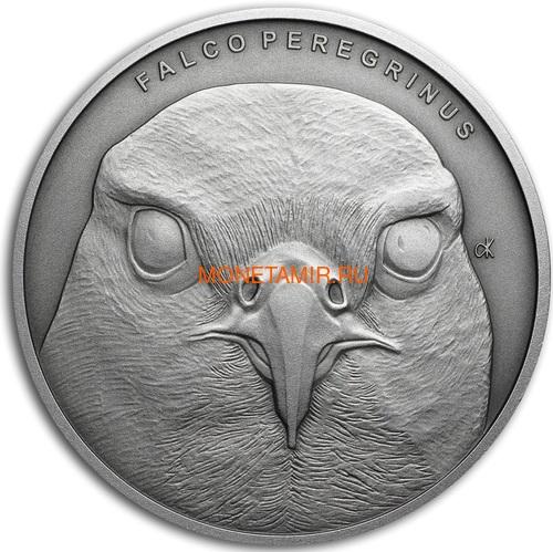 Ниуэ 1 доллар 2019 Сокол Сапсан Животные Чемпионы (Niue 1$ 2019 Peregrine Falcon Animal Champions 1 oz Silver Coin) Буклет.Арт.67 (фото)