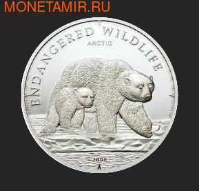 Арктический белый медведь