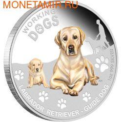 Тувалу 1 доллар 2010.Лабрадор-ретривер серия Служебные собаки.Арт.000579742202/60 (фото)