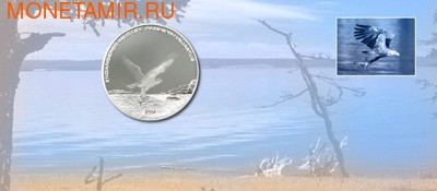 Морской орел (фото)