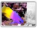 Ниуэ 1 доллар 2013. «Королевская Грамма» серия «Тропические коралловые рыбы».Арт.000322246466