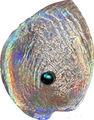 Палау 5 долларов 2012.Устрица с жемчужиной - Халиотис Айрис (Haliotis Iris).Арт.000585142144/60