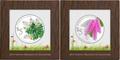Сингапур 5+5 долларов 2015.Орхидея – Дендробиум Львиный (Dendrobium leonis) и Орхидея – Дендробиум Односторонний (Dendrobium secundum) (2 box).Арт.60