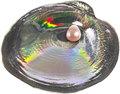 Палау 5 долларов 2013.Устрица с жемчужиной Тампико (cyrtonaias tampicoensis).Арт.000300049200